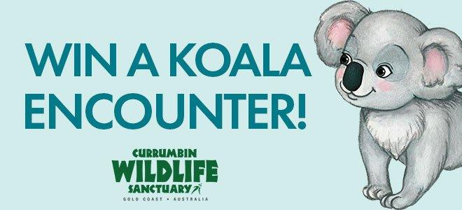 Win A Koala Encounter