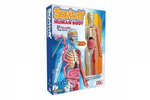 Smart Lab Squishy Human Body by Various