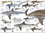 Australian Sharks Poster
