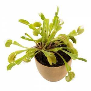 Carnivorous Plant by Various