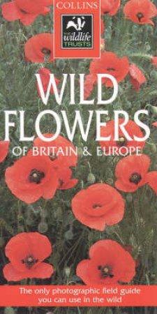 Collins Wildlife Trust Guide: Wild Flowers by Peter Heukels
