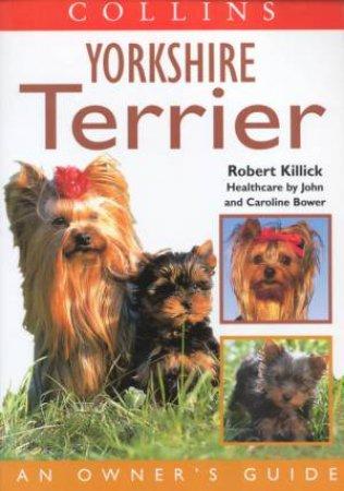 Yorkshire Terrier by Robert Killick