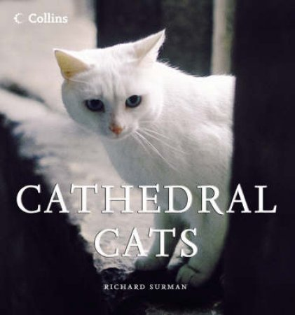 Cathedral Cats by Richard Surman