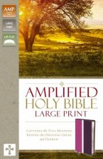 Amplified Holy Bible  Large Print Ed