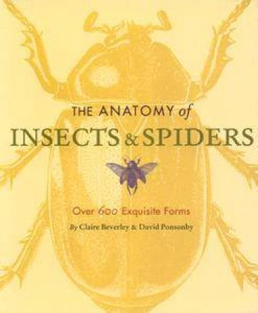 Anatomy Of Insects & Spiders by Claire Beverley