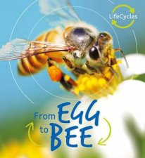 Egg to Bee Lifecycles