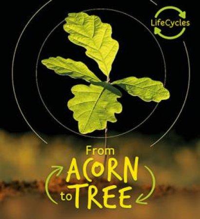 Acorn to Tree (Lifecycles) by Camilla de la Bedoyere