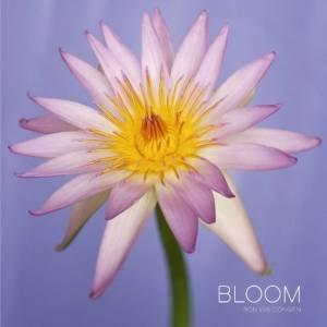 Bloom by Ron Van Dongen