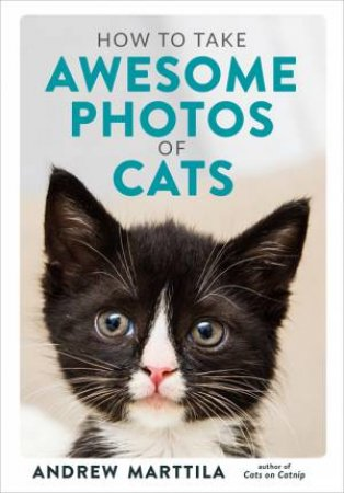 How To Take Awesome Photos Of Cats