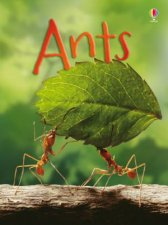 Beginners: Ants by Lucy Bowman