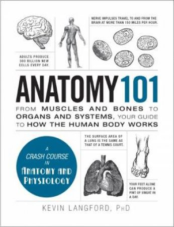 Anatomy 101 by Kevin Langford