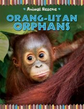 Animal Rescue Orangutan Orphans