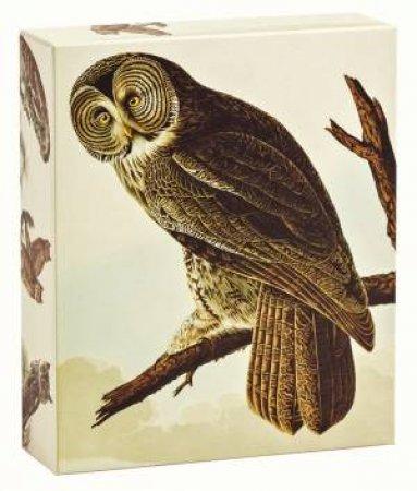 Audubon Owls: QuickNotes