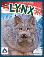 Wild Cats Lynx
