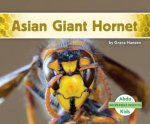Incredible Insects Asian Giant Hornet