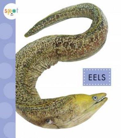 Eels by Mari C Schuh