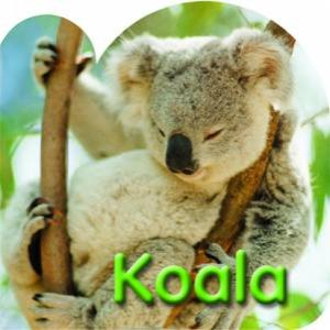 A Steve Parish Board Book: Koala