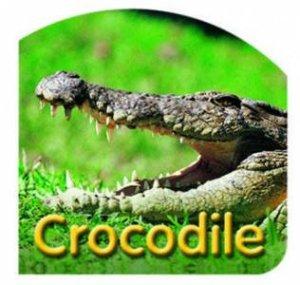 Steve Parish Board Book: Crocodille