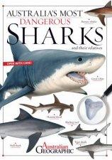 Australias Most Dangerous Sharks