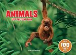 Animals Lift the Flap Book