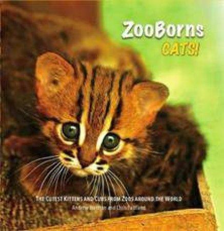 Zooborns: Cats by Andrew Bleiman & Chris Eastland