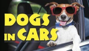 Dogs In Cars by Various
