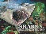 Sharks  Predators Of The Deep