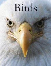 Encyclopedia Of Birds