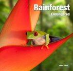 Rainforest  Endangered