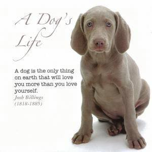 A Dog's Life by Various