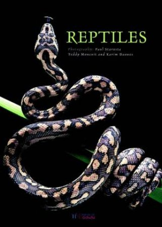 Reptiles by Teddy Moncuit & Karim Daoues & Paul Starosta