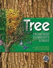 Tree From Seed To Mighty Forest