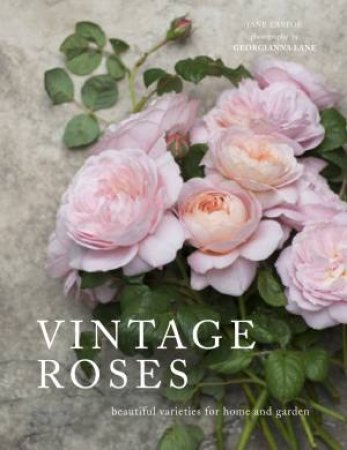 Vintage Roses: Beautiful Varieties For Home And Garden