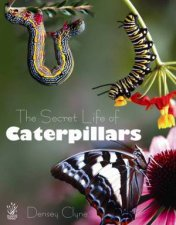 The Secret Life of Caterpillars by Densey Clyne