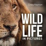 Wildlife In Pictures by Craig Hayman