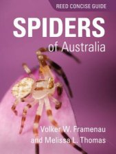 Reed Concise Guide To Spiders of Aus