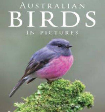 Australian Birds In Pictures