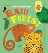 10 Pop Ups Rain Forest