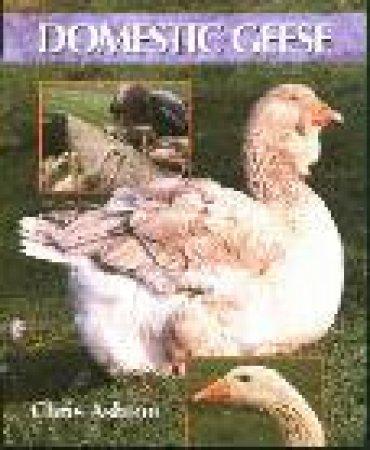 Domestic Geese by Chris Ashton