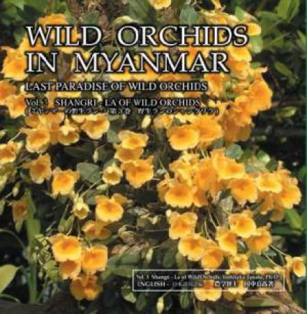 Wild Orchids in Myanmar